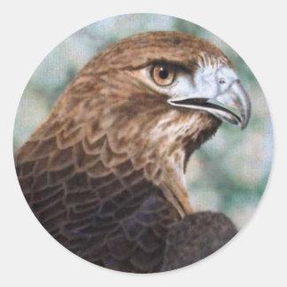 Red-tail Hawk Sticker