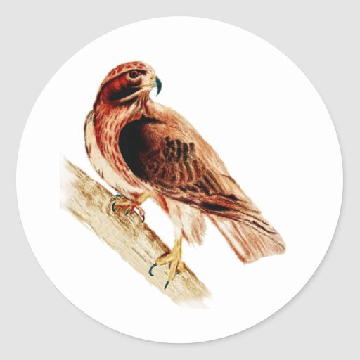 Red Tail Hawk Stickers