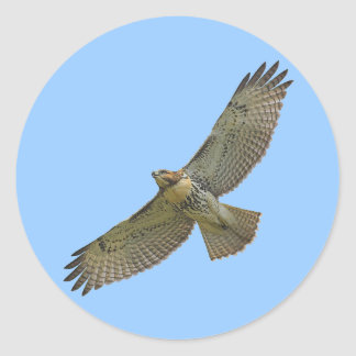 red-tail soaring Stickers Round Sticker