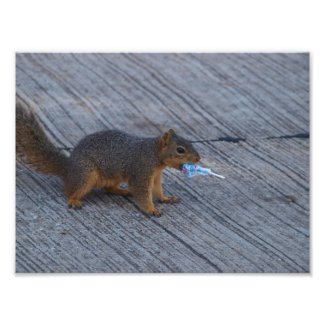 Red-Tail Squirrel Photo Print