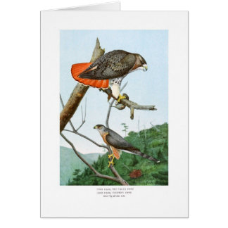Red-tailed and Cooper's Hawks Card