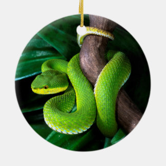 Red-tailed bamboo pitviper ceramic ornament