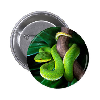 Red-tailed bamboo pitviper pinback button