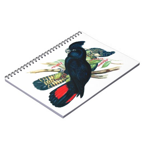 Red tailed, Black (Banksian) Cockatoos. Spiral Notebook