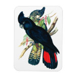 Red tailed, Black (Banksian) Cockatoos. Vinyl Magnets