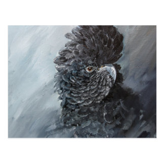 Red Tailed black Cockatoo gifts Postcard