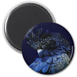 Red-Tailed Black Cockatoo in Blue 2 Inch Round Magnet