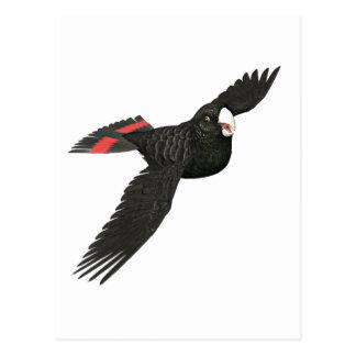 Red Tailed Black Cockatoo Postcard