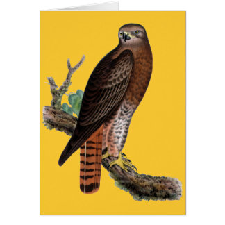 Red-tailed Black Hawk Card