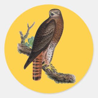 Red-tailed Black Hawk Classic Round Sticker