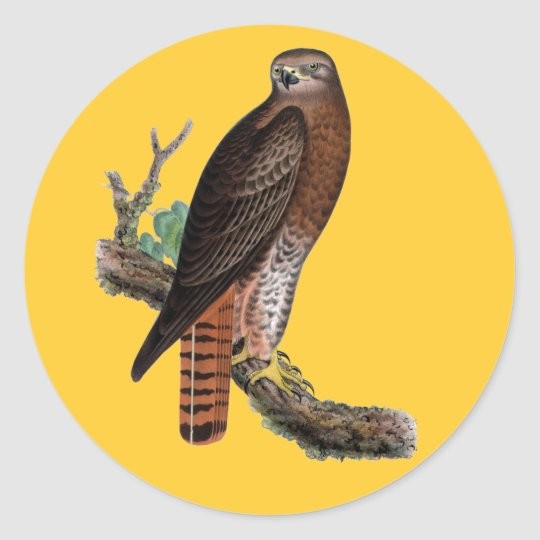 Red-tailed Black Hawk Classic Round Sticker