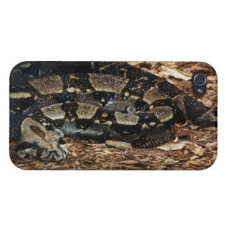 Red Tailed Boa Cover For iPhone 4
