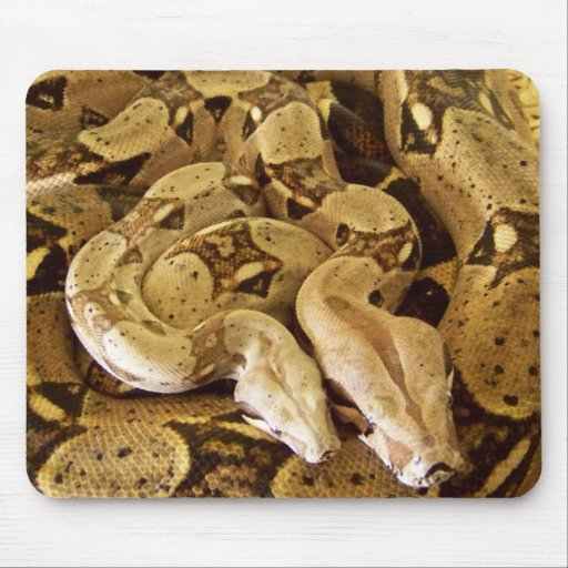 Red Tailed Boas Mouse Pad