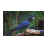 Red-tailed cockatoo bird canvas print