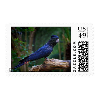 Red Tailed Cockatoo Postage Stamps