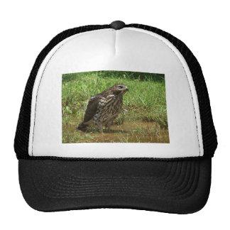 red tailed halk trucker hat