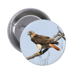 Red-tailed Hawk 2 Inch Round Button