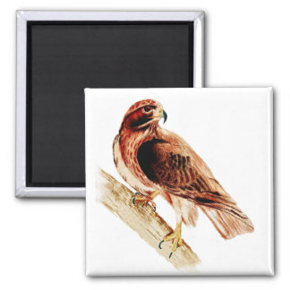 Red Tailed Hawk 2 Inch Square Magnet