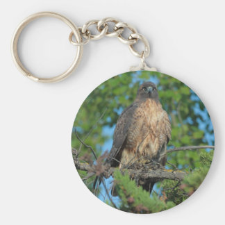 Red-tailed Hawk 2 Keychain