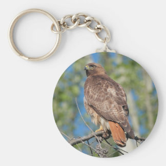 Red-tailed Hawk 3 Keychain