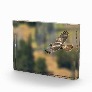 Red-tailed Hawk Acrylic Award