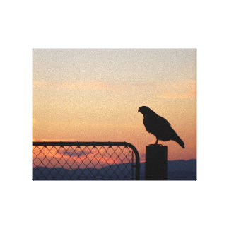 Red-tailed Hawk at Sunset Canvas Print