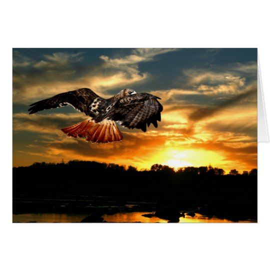 Red tailed hawk at sunset card