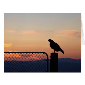 Red-tailed Hawk at Sunset Card
