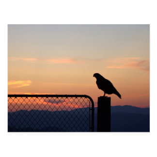 Red Tailed Hawk at Sunset, Humboldt County, CA Postcard