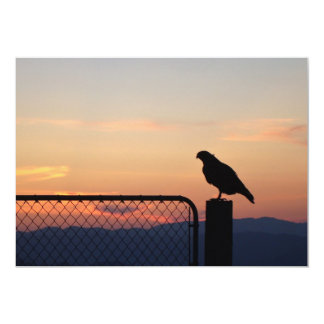 Red-tailed Hawk at Sunset Invites