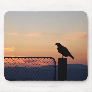 Red-tailed Hawk at Sunset Mouse Pad