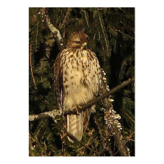 Red Tailed Hawk ATC Large Business Card