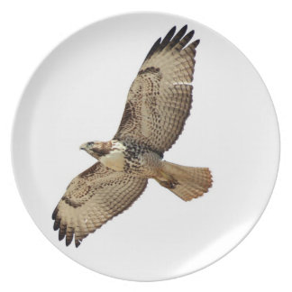 Red Tailed Hawk Bird Raptor Wildlife Animals Plate