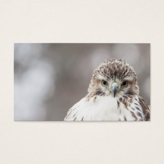 Red Tailed Hawk Business Card