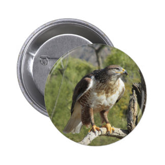 Red Tailed Hawk Pinback Buttons