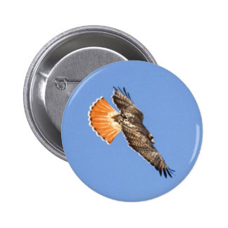 Red-tailed Hawk Buttons