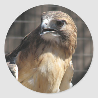 Red-tailed Hawk/Buzzard Classic Round Sticker