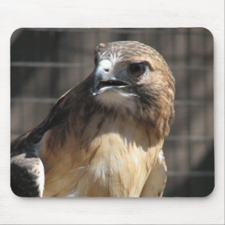 Red-tailed Hawk/Buzzard Mouse Pad