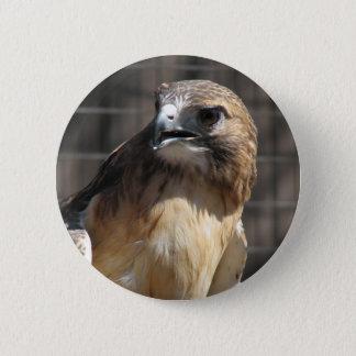 Red-tailed Hawk/Buzzard Pinback Button