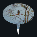 """Red Tailed Hawk Cake Topper<br><div class=""""desc"""">These items feature an original photograph of a red-tailed hawk in a bare tree.</div>"""