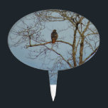 "Red Tailed Hawk Cake Topper<br><div class=""desc"">These items feature an original photograph of a red-tailed hawk in a bare tree.</div>"