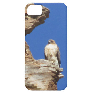 Red Tailed Hawk iPhone 5 Cases