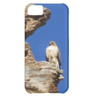 Red Tailed Hawk iPhone 5C Cases