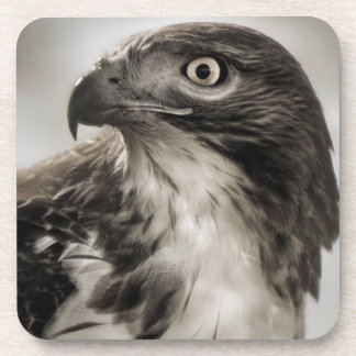 Red-tailed Hawk Coaster