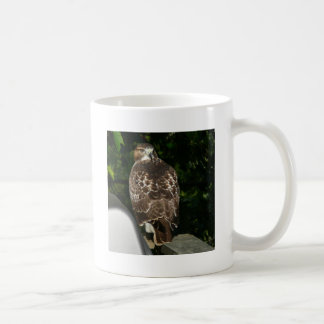 Red tailed Hawk Coffee Mug