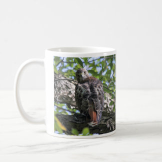 Red-tailed Hawk Coffee Mug