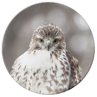 Red Tailed Hawk Dinner Plate