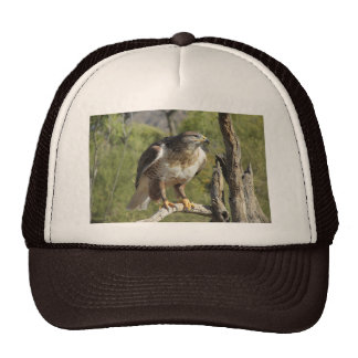 Red Tailed Hawk Hat