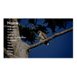 Red-tailed Hawk, immature Business Card