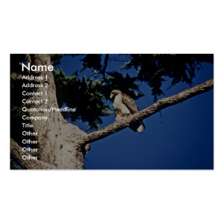 Red-tailed Hawk, immature Double-Sided Standard Business Cards (Pack Of 100)